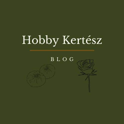 Hobby Kertész blog